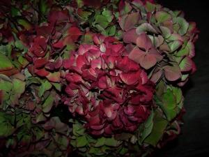 Anitqued Hydrangea