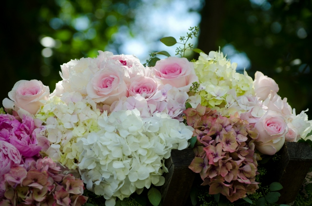 Hydrangea and Roses on Arbor